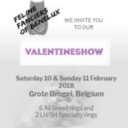Belgiun Flyer