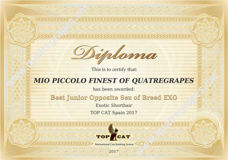 Diploma WCF