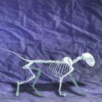 Fondo Anatomia 1