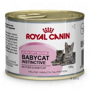 babycat instictive