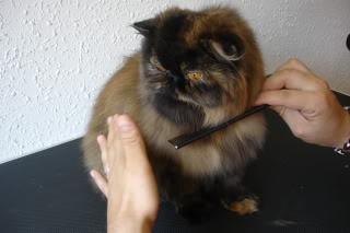 peinado2