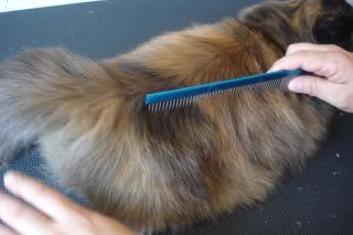 peinado4