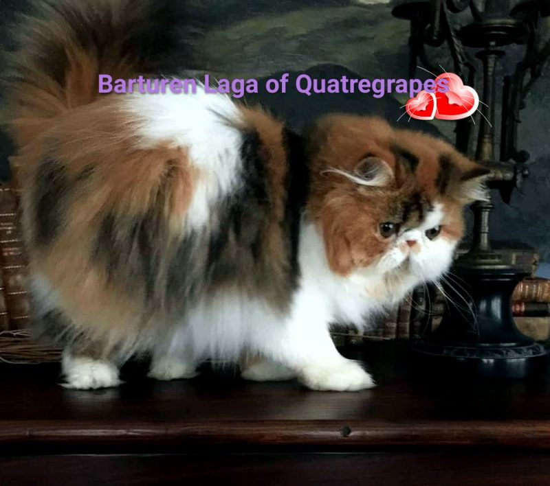 Quatregrapes Cattery